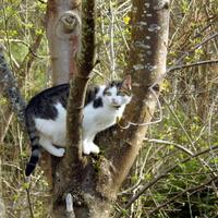 Leśny kot!