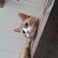 Shino kotek na wsi.
