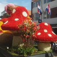 Takie muchomorki kwiatowe