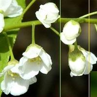 Wiosenna biel i zieleń:)