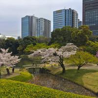 Wiosna w Tokio