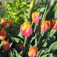 Wiosno trwaj!