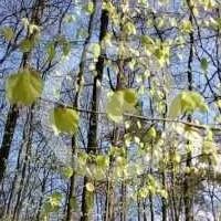 Zielone ramiona wiosny..