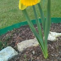 Życzę Wszystkim nadejścia upragnionej wiosny!