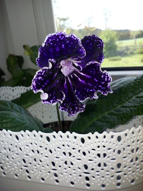 Kwiatek dla was kochani