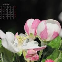 Kartka z kalendarza - MAJ