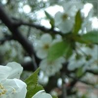 Niby wiosna
