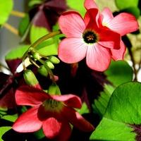 Radosne kwiatki:)