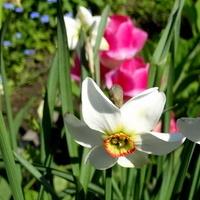 Słoneczna, pachnąca, kolorowa- po prostu wiosna :)