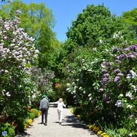 Spacer w ogrodzie botanicznym