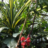 Szklarnie Botaniczny