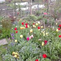 wiosennie i kolorowo