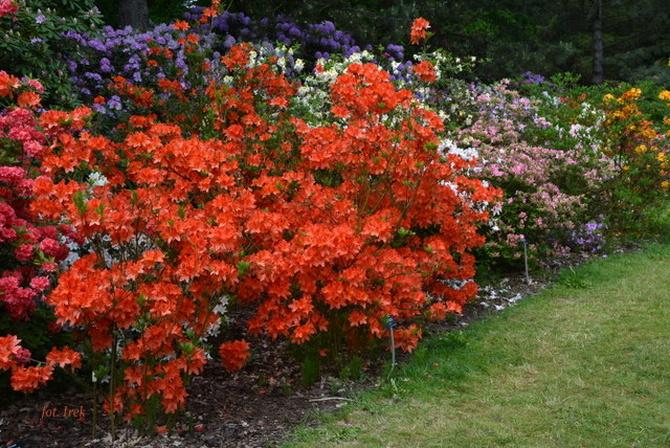 Dalsza część spaceru po ogrodzie botanicznym