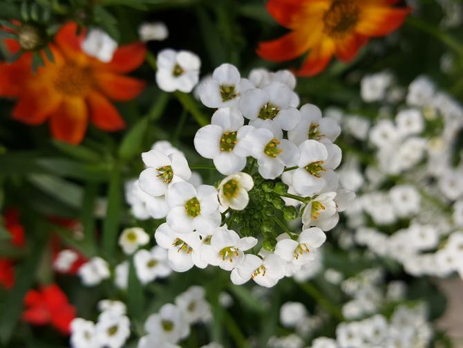 kwiaty .....