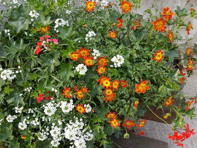 kwiaty.......