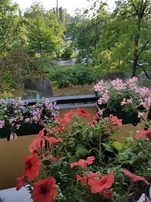 moje na balkonie ...