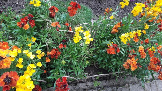 moje ulubione kwiaty wiosenne