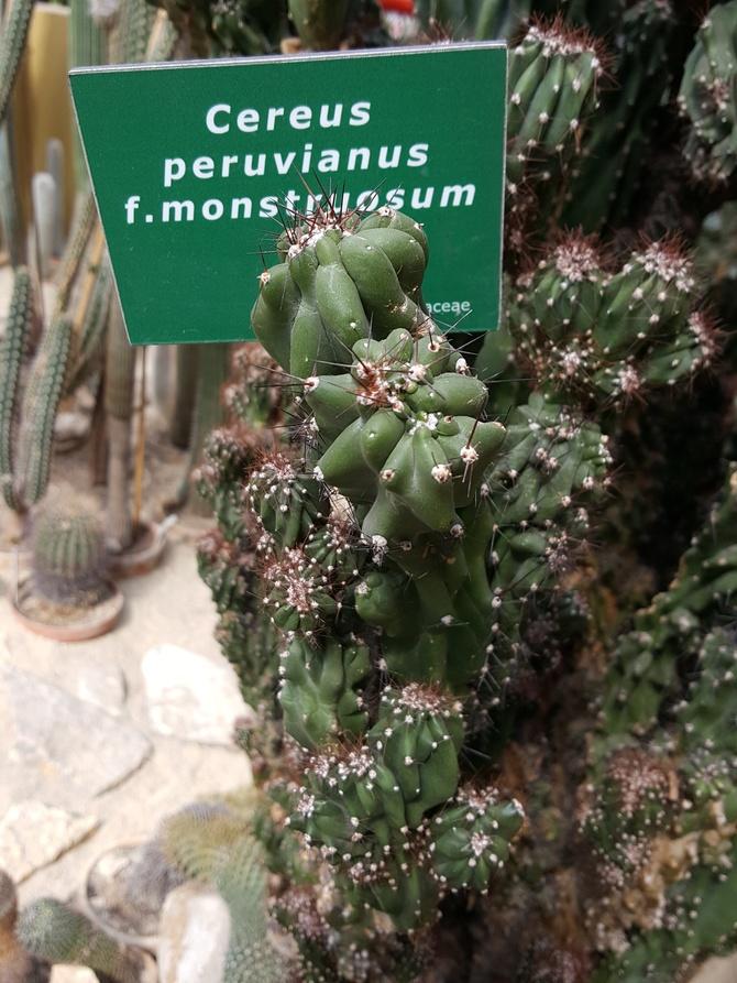 Palmiarnia Gliwice