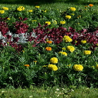 Dywanik kwiatowy w parku