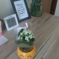 kwiatek  z usmiechem