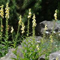 Kwiaty górskie