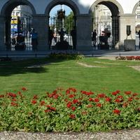 Kwiaty w okolicy Grobu Nieznanego Żołnieża