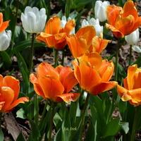 Majowe kwiatki