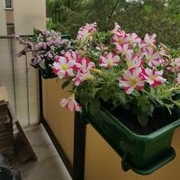 moje na balkonie...