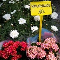 Opole w centrum ogrodniczym
