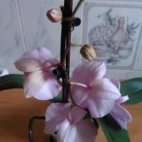 Taki kwiatek u mojej córki