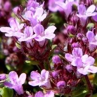 Urok drobniutkich kwiatuszków:)