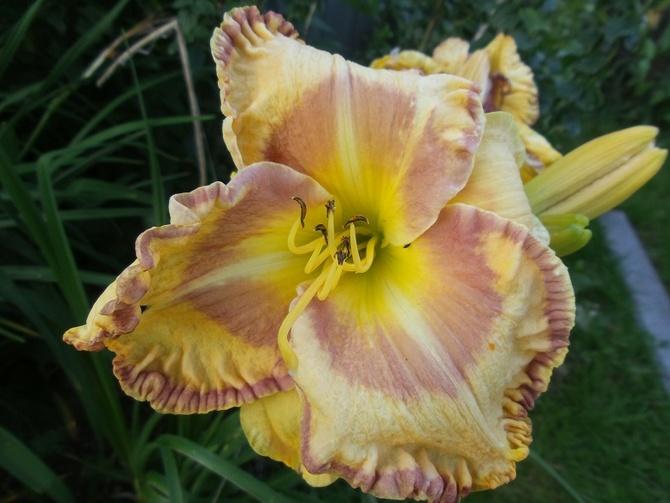 Zakochałam się w nich jak w każdym kwiatuszku