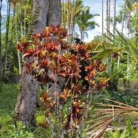 Barwy dżungli