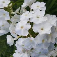 biały.......