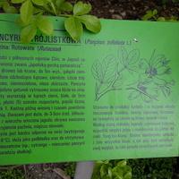 Botaniczny Wrocław