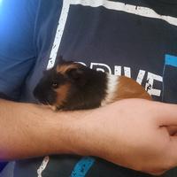 Charlie, Nasz nowy członek rodziny.