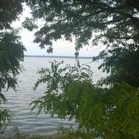 Drzewa nad śląskim zalewem ;)