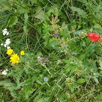 eksperymentalna łąka