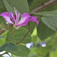 Kwiaty drzewa storczykowego