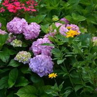 Kwiaty na moim osiedlu.