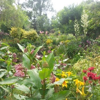 lato w ogrodzie kolorowe