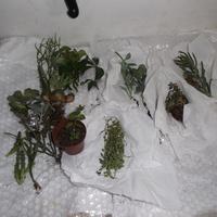 Mam nowe roślinki :)