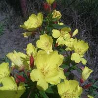 Może ktoś wie co to za kwiatek?