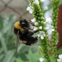 Pracujemy w ogrodach jak pszczółki :)