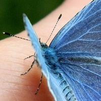 Towarzyski motylek;)