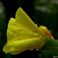 Z deszczem na dzień dobry :)