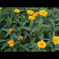 Żółte kwiaty na wietrze