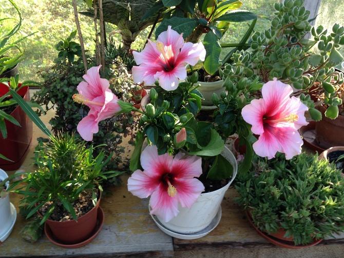 Coraz więcej kwiatów