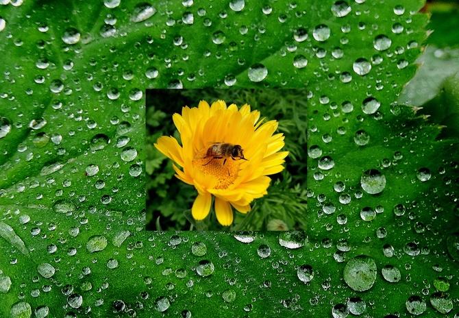 Jedni czekają na deszcz, inni na słońce