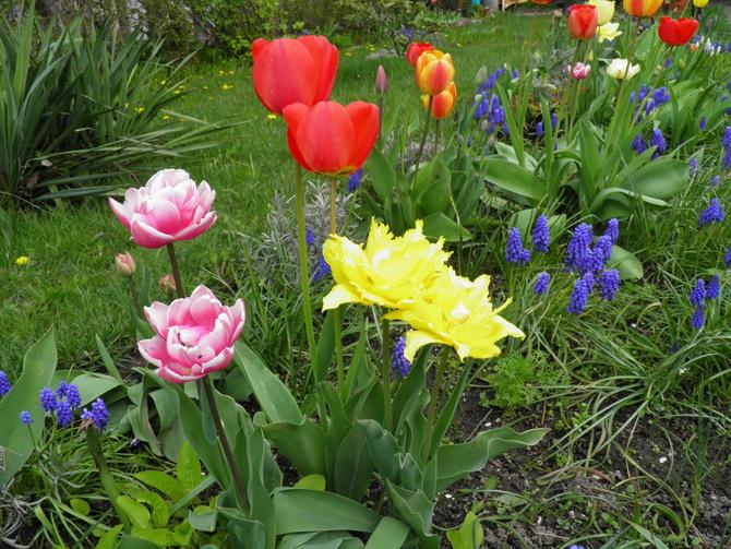kwiaty 2017